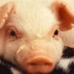 lean hog