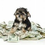 pricey pup