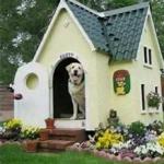 fancy doghouse