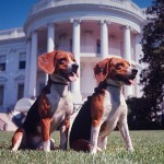 dogs on white house lawn